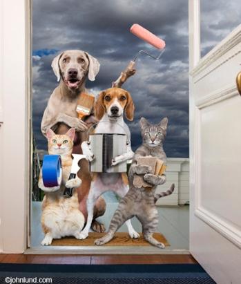 Funny-animal-home-repair